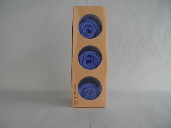 Gefrier Rose Marine Blue